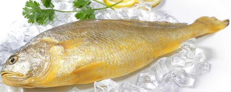 黄花鱼是海鱼吗