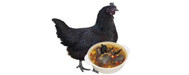 五黑鸡是什么鸡
